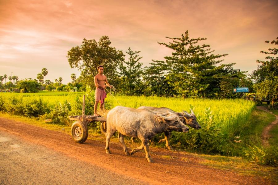 cambodia_RK_2012-39